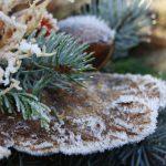 Florale Weihnachtswelt